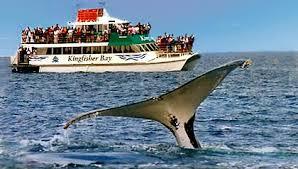 SUNLANDER GROUP RAIL TOUR TO FRASER ISLAND Departs Cairns 07.10 - 13.10.14